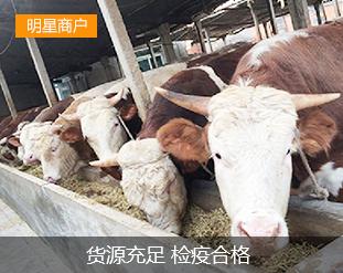 众诚西门塔尔肉牛育肥基地