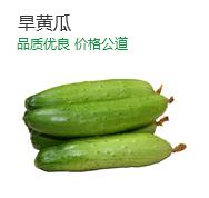 优质可口旱黄瓜