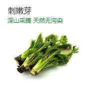 辽宁省优质刺嫩芽山野菜供应