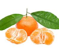 雪峰蜜桔-柑橘