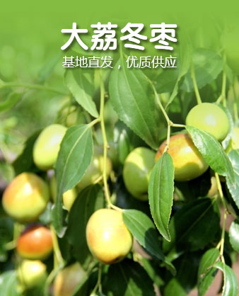 大荔冬枣 销售批发