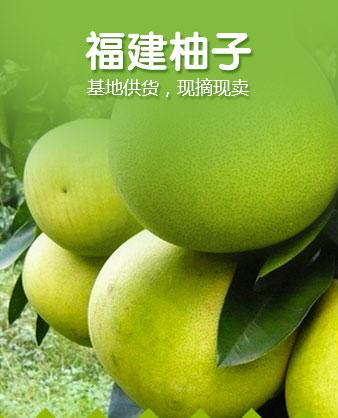 福建柚子柚子
