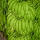 香蕉 天宝蕉