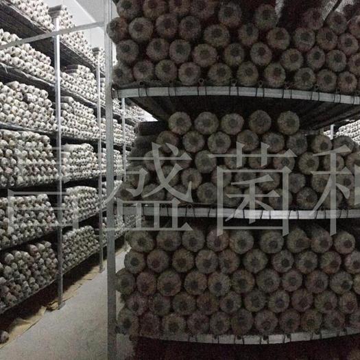 河南省三门峡市灵宝市 昌盛818香菇菌种(中温偏高型)
