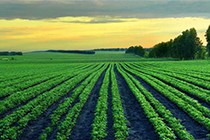 休耕补贴每亩最高1300元,您知道吗?