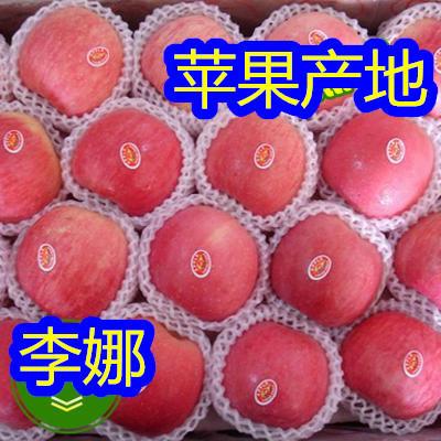 山東省臨沂市沂南縣棲霞蘋果 75mm以上 條紅 紙袋