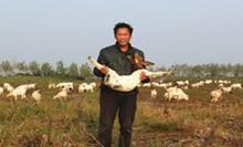 跟儿子学网销 几百只山羊卖了20多万