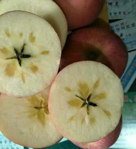 重慶市云陽縣紅富士蘋果