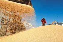 16年最新粮食产量报告:粮食总产12324.8亿斤