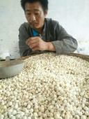 純天然白蓮,自產自銷,無硫蓮子,特級大粒