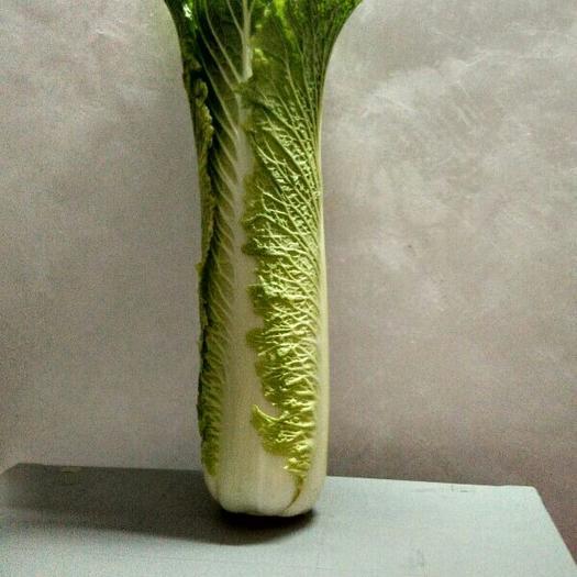 廣西壯族自治區崇左市天等縣竹筒白菜 3~6斤