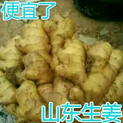 这是一张关于面姜 5两以上 水洗 生姜 面姜的产品图片