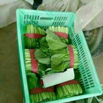 速生小白菜 20~25公分
