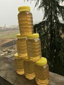 枇杷蜜 塑料瓶裝 100% 2年以上