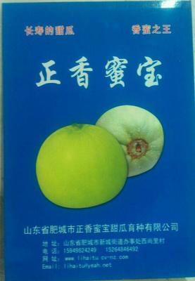 山东省泰安市肥城市正香蜜宝甜瓜种子
