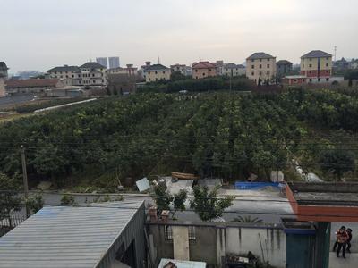 浙江省杭州市萧山区天香