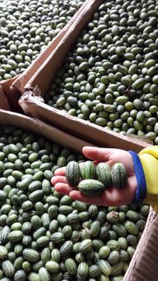 江西省上饶市鄱阳县拇指西瓜种子1