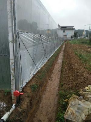 江西省赣州市会昌县蛇莓