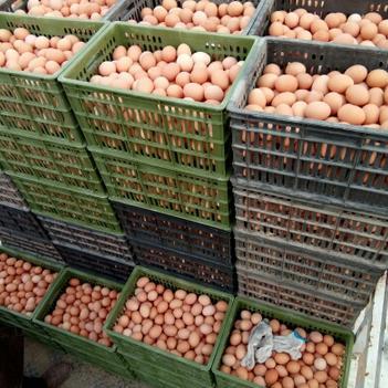 普通雞蛋 食用 散裝