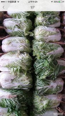 黑龙江省大庆市肇州县东北大矮白菜 3~6斤