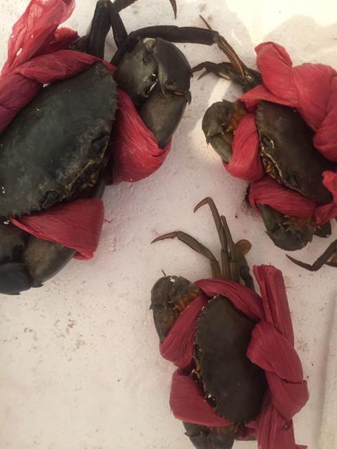 青蟹 4.0两以上 母蟹