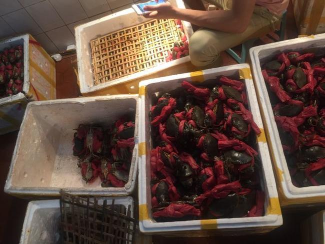 青蟹 3.5-4.0两 公蟹