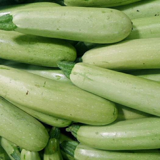 山東省臨沂市沂水縣綠皮西葫蘆 0.6~0.8斤