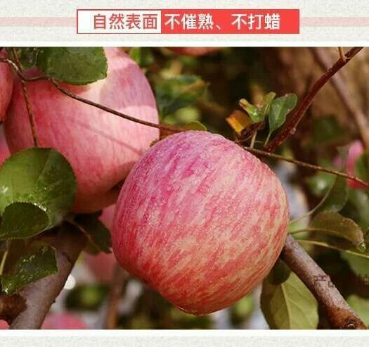 紅富士蘋果 脆甜多汁可以帶皮吃,5斤裝8-12個包郵,精品中大果