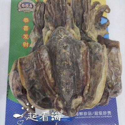 广东深圳宝安区斑乌贼