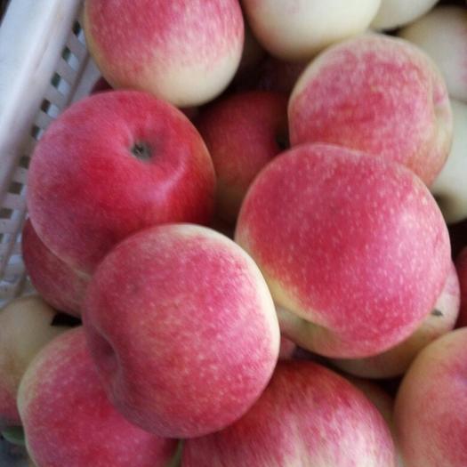 山東省日照市莒縣美八蘋果 膜袋 片紅 75mm以上