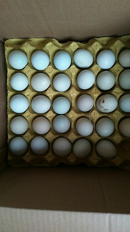 綠殼雞蛋 食用 箱裝