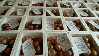 紫香一号百香果  60 - 70克 广西北流百香果之乡酸酸甜甜五斤