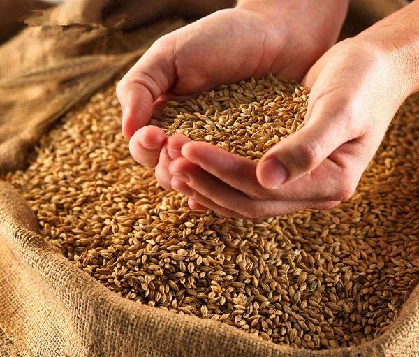 小麦标价进入高位整顿理阶段