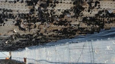 内蒙古自治区赤峰市敖汉旗黑木耳 紫色