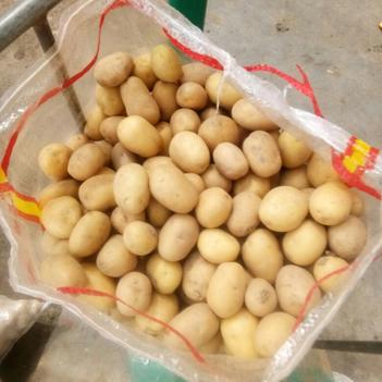 迷你土豆 1兩以下