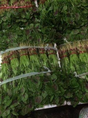 浙江省金华市兰溪市红苋菜 20-25cm 紫红