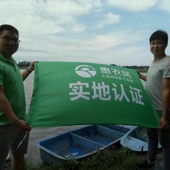 克氏原螯虾 4-6钱 人工养殖