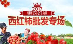 西红柿批发专题