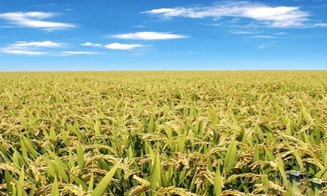 2017年农民合作社该如何获得政府扶持?这五点必须关注 农民合作社建设配图
