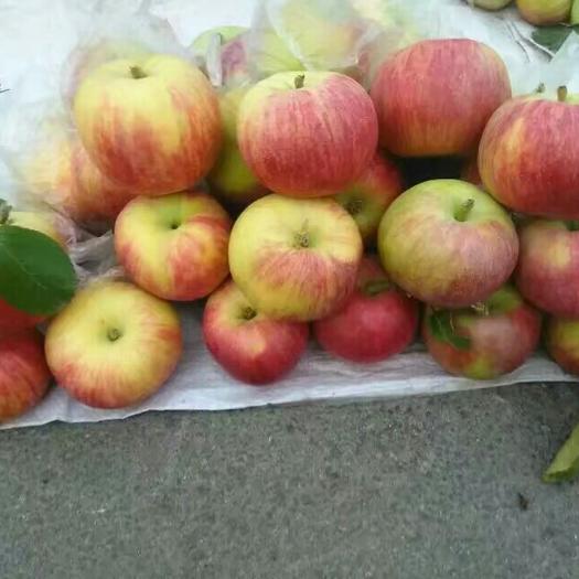 山東省泰安市新泰市涼香蘋果