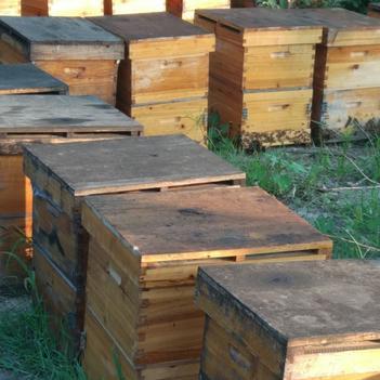 蜂蜜百花蜜