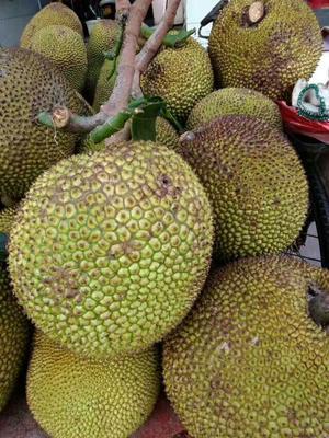 泰国菠萝蜜 10-15斤