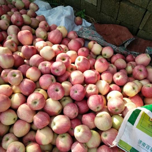 遼寧省大連市瓦房店市斗南蘋果