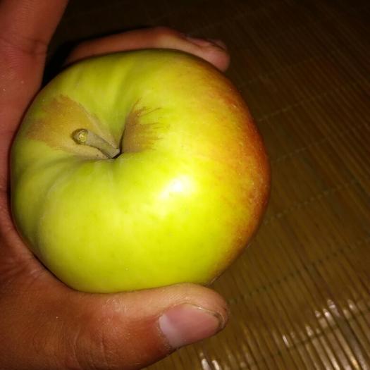 山西省運城市臨猗縣華丹蘋果