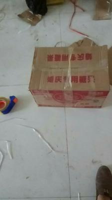 河南省洛阳市老城区亚洲活蝎子