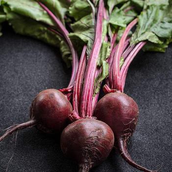 紅甜菜 30~40cm