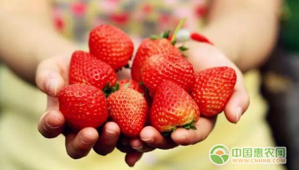 昌平草莓的品牌进一步打响