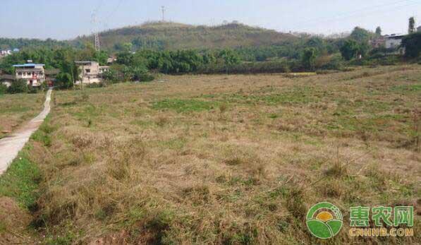 农村闲置土地荒废的土地