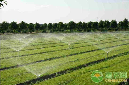 农村闲置土地进行土地流转后的种植景象
