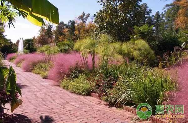 回乡创业种植观赏草,带动村民增收致富